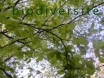 Inventaire du patrimoine naturel